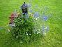 Riddarsporre  2009-07-23 IMG_0223