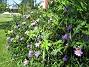 IMG_0059  2009-08-07 IMG_0059