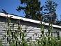 Syrenbuddleja  2009-08-07 IMG_0097