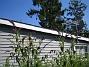 Syrenbuddleja  2009-08-07 IMG_0098