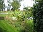 Bakgården  2009-09-05 IMG_0055