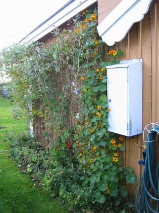 Krasse &nbsp 2009-10-31 IMG_0014 Granudden Färjestaden Öland
