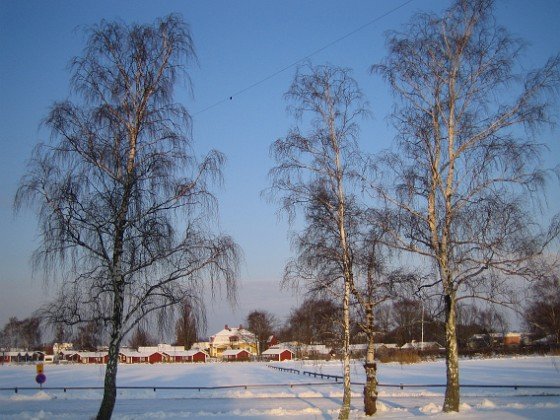 Granudden Vintern har kommit till Öland.&nbsp 2009-12-20 001 Granudden Färjestaden Öland