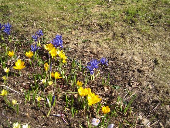 2010-04-02 063 Granudden Färjestaden Öland