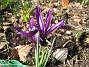 Iris  2010-04-02 020
