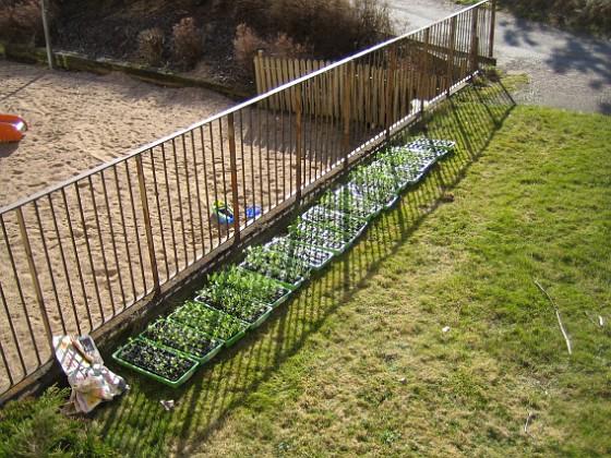 Utomhusodling Förra helgen hade jag mina plantor ute i solen (och blåsten).&nbsp 2010-04-16 IMG_0066 Granudden Färjestaden Öland