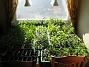Köket Räkna gärna lådorna :-) 2010-04-16 IMG_0074