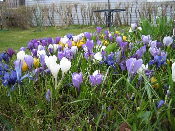 2010-04-17 008 Granudden Färjestaden Öland