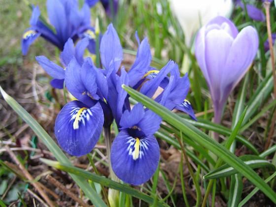 2010-04-17 020 Granudden Färjestaden Öland