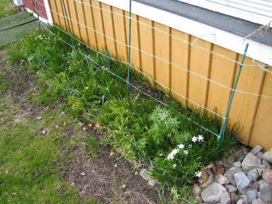 2010-04-17 031 Granudden Färjestaden Öland