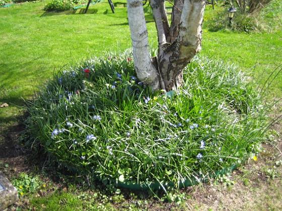Björken  2010-05-02 061 Granudden Färjestaden Öland