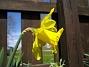 Påsklilja  2010-05-02 046
