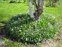 Björken  2010-05-02 061