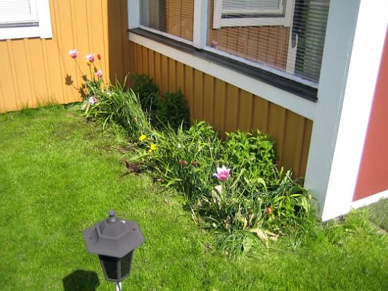 Vinkel Tulpanerna har nog tagit stryk i kylan för de lyser med sin frånvaro. 2010-05-23 009 Granudden Färjestaden Öland