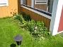 Tulpanerna har nog tagit stryk i kylan för de lyser med sin frånvaro. (2010-05-23 009)