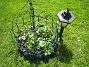 Riddarsporrar Här är några av mina nysatta plantor. 2010-06-06 IMG_0034