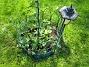Riddarsporrar Här är några av mina nysatta plantor. 2010-06-06 IMG_0036