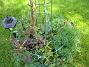 Rosor och Riddarsporrar  2010-06-06 IMG_0038