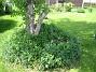 Björken  2010-06-06 IMG_0043
