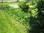 Bakgården  2010-06-06 IMG_0053