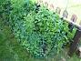 Ackleja  2010-06-06 IMG_0056
