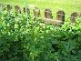 Ackleja  2010-06-06 IMG_0059