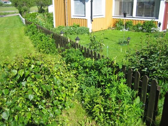 Granudden &nbsp 2010-06-12 IMG_0063 Granudden Färjestaden Öland