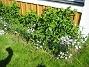 IMG_0074  2010-06-12 IMG_0074