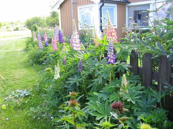 Granudden &nbsp 2010-06-19 IMG_0002 Granudden Färjestaden Öland