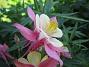 IMG_0042  2010-06-19 IMG_0042