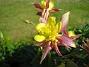 IMG_0044  2010-06-19 IMG_0044