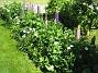 IMG_0054  2010-06-19 IMG_0054