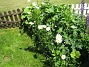 IMG_0057  2010-06-19 IMG_0057