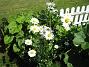 IMG_0058  2010-06-19 IMG_0058
