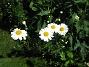 IMG_0060  2010-06-19 IMG_0060