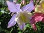 IMG_0081  2010-06-19 IMG_0081