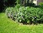 IMG_0086  2010-06-19 IMG_0086