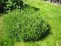 IMG_0102  2010-06-19 IMG_0102