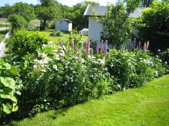 Bakgården Här har jag också satt Lupiner, men även många anda växter. Min egen lilla sommaräng! 2010-06-24 IMG_0005 Granudden Färjestaden Öland