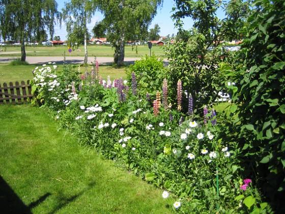 Bakgården  2010-06-27 IMG_0086 Granudden Färjestaden Öland