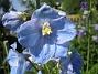 IMG_0015  2010-07-03 IMG_0015