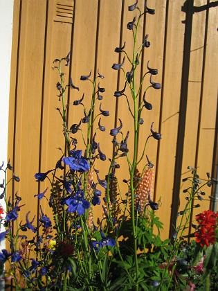Granudden &nbsp 2010-07-04 IMG_0007 Granudden Färjestaden Öland