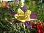 IMG_0011  2010-07-04 IMG_0011