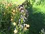 IMG_0021  2010-07-04 IMG_0021