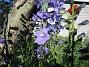 IMG_0043  2010-07-04 IMG_0043
