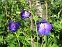 IMG_0044  2010-07-04 IMG_0044