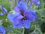 IMG_0076  2010-07-04 IMG_0076