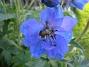 IMG_0079  2010-07-04 IMG_0079