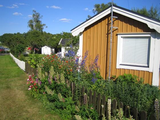 Granudden Här ser vi Lupiner och Borstnejlika utanför (!) staketet och Studentnejlika, Praktriddarsporre och Pastellackleja på insidan.&nbsp 2010-07-07 IMG_0002 Granudden Färjestaden Öland