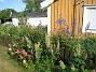 Här ser vi Lupiner och Borstnejlika utanför (!) staketet och Studentnejlika, Praktriddarsporre och Pastellackleja på insidan. (2010-07-07 IMG_0003)